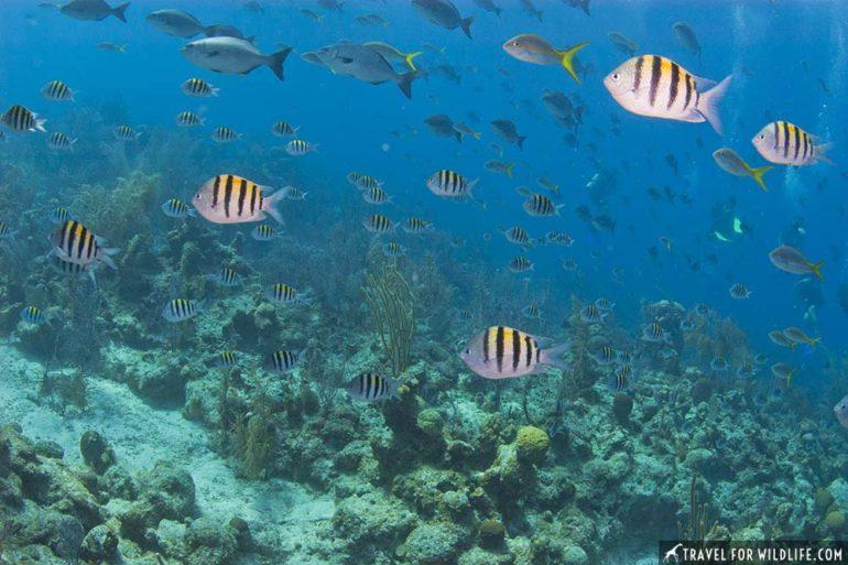 Belize wildlife photos by Hal Brindley