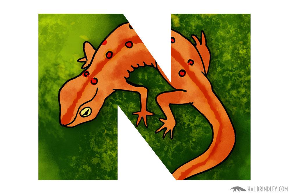 animals beginning with n