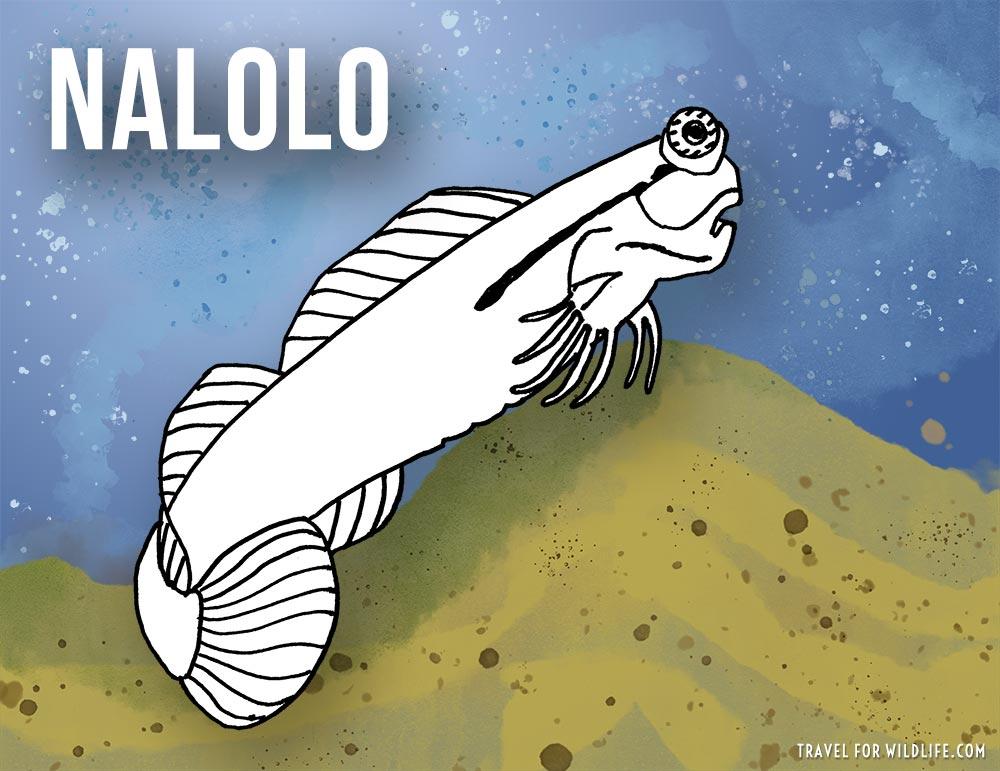 Nalolo