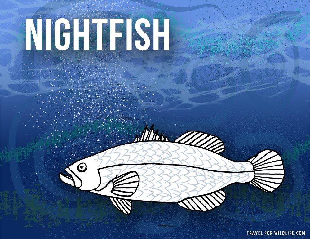 Nightfish