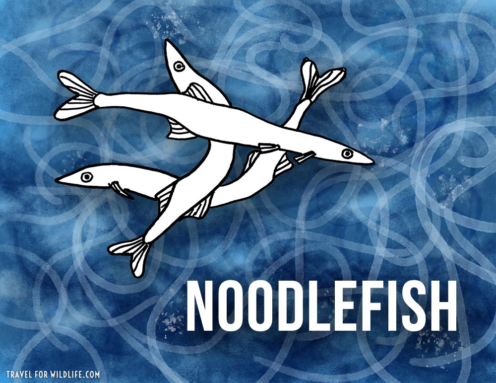 Noodlefish