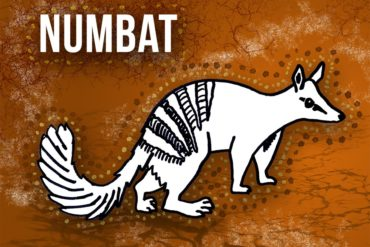 animals beginning with n: numbat