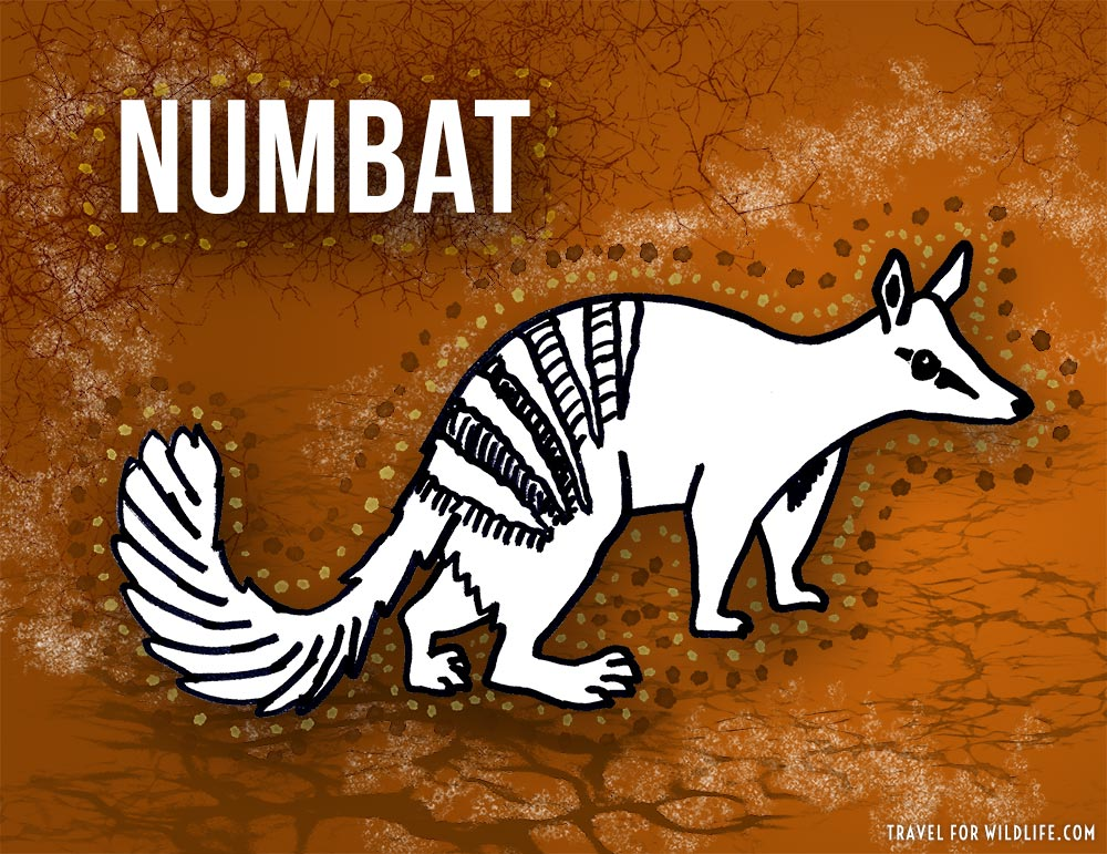 animals beginning with n: numbat
