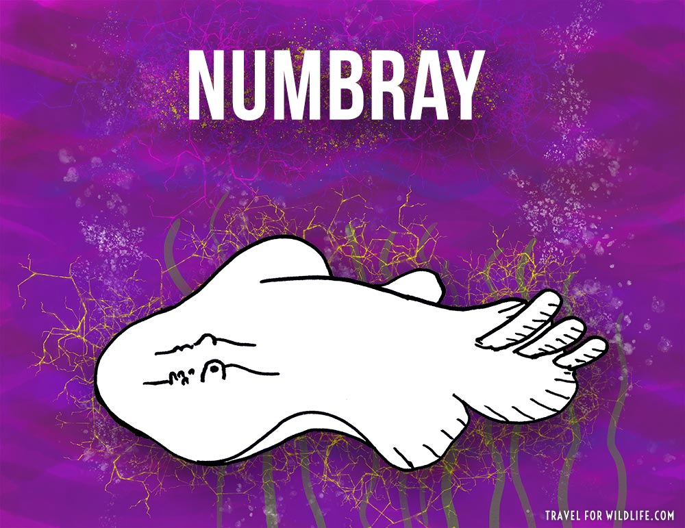Numbray