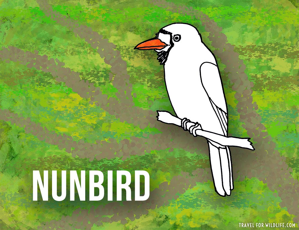 Nunbirds
