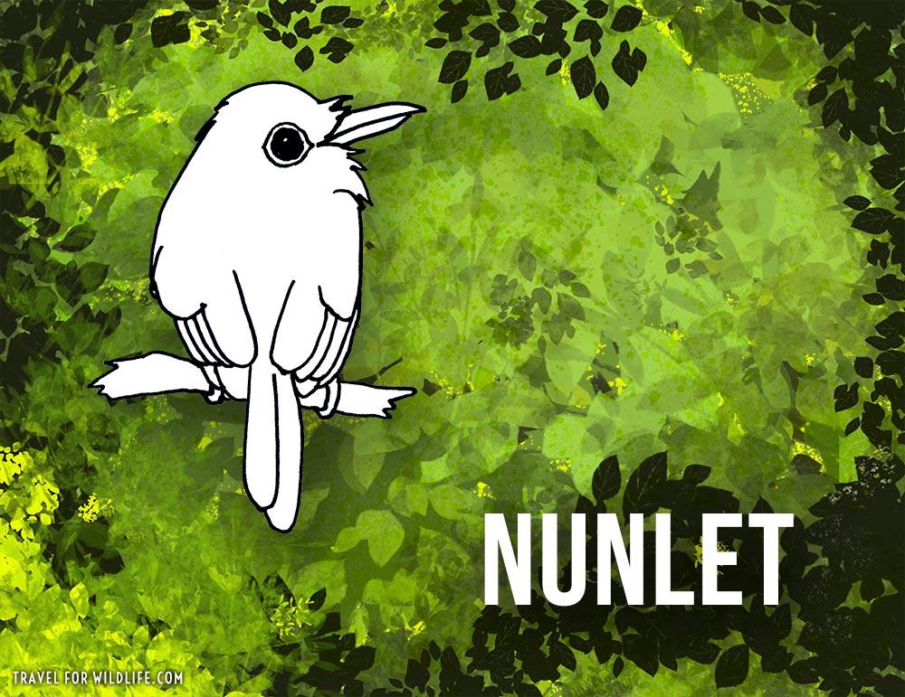Nunlet