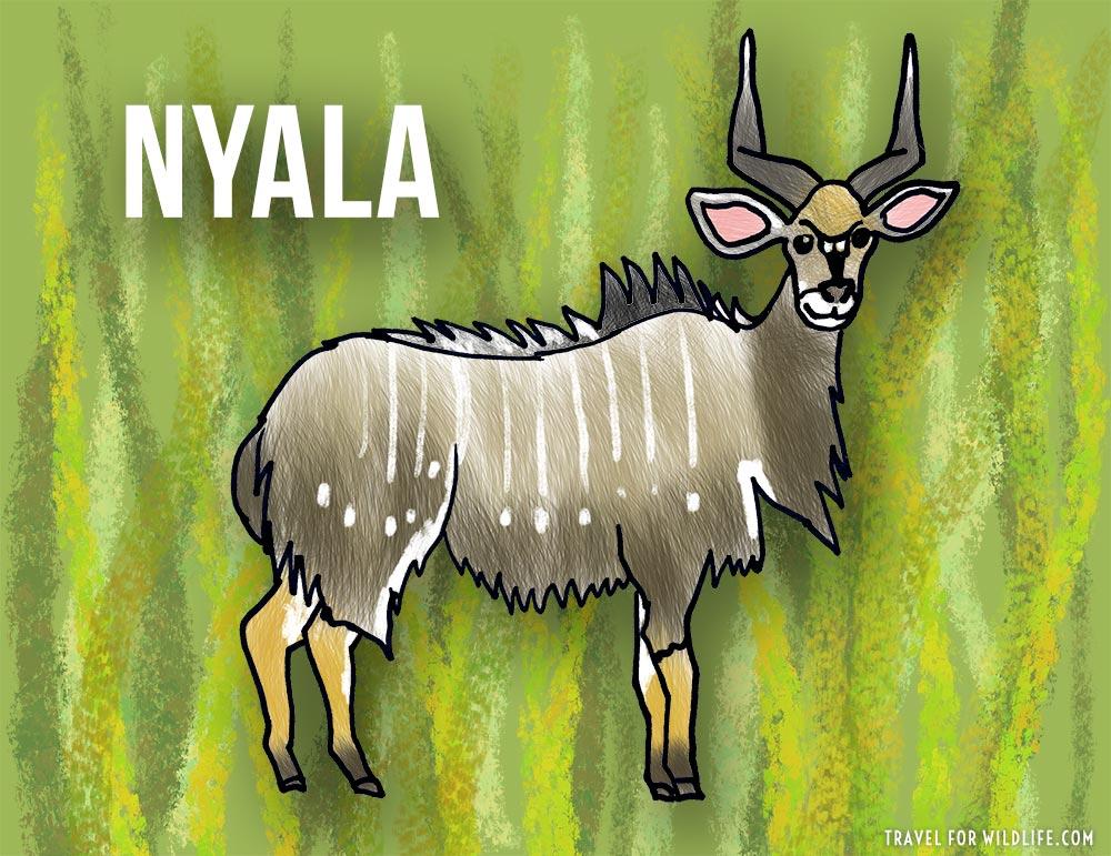 Nyala: animals that start with n