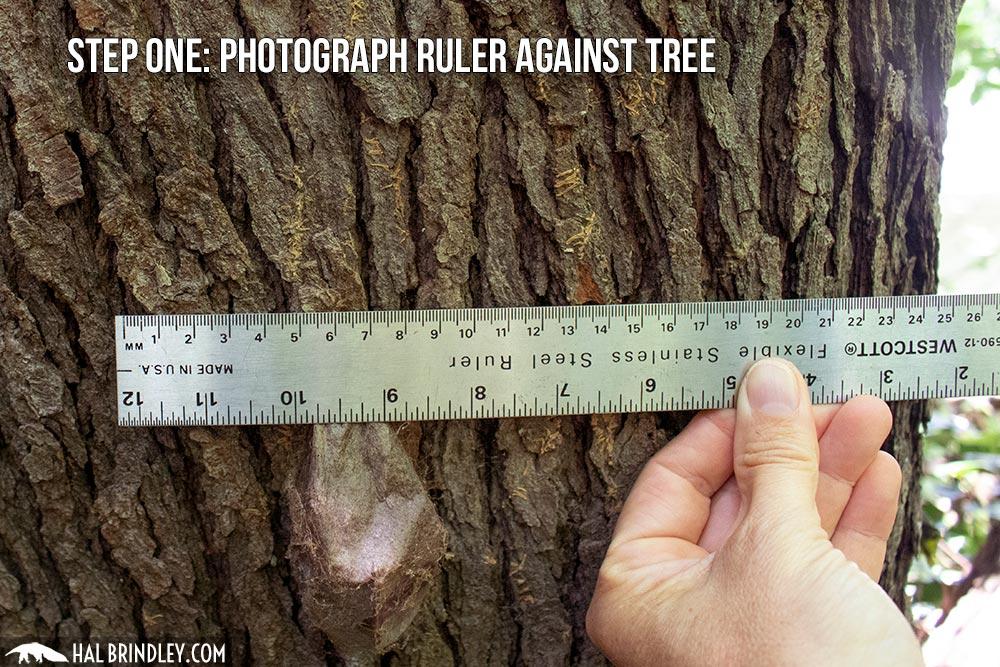 photograph a ruler