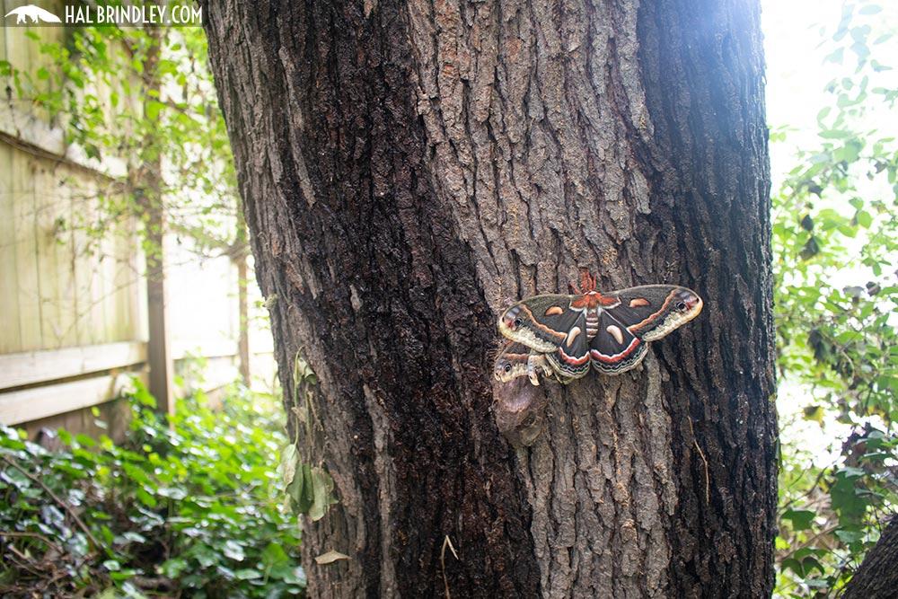 moths resting on a tree